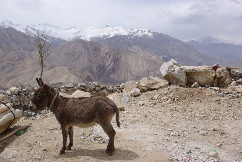Donkey near Nako village.
