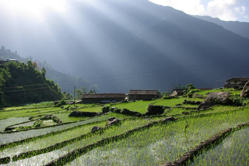 Rays of early morning light over the Chhomrong rice fields.