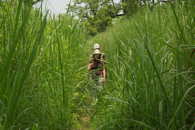 Edel and guide navigating the tall grass in Chitwan National Park.