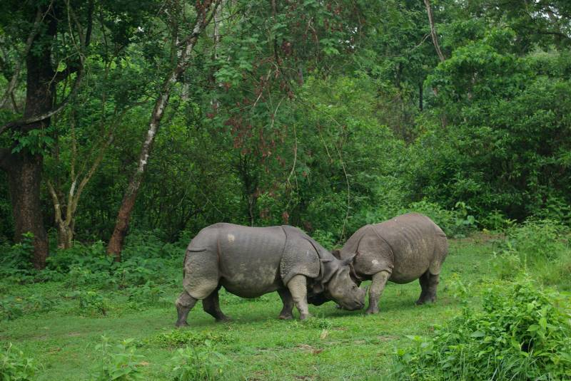 Rhinos in Chitwan national park.