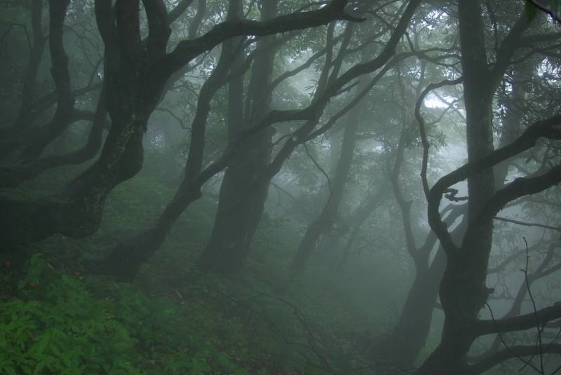 Foggy forest on Emei Shan.