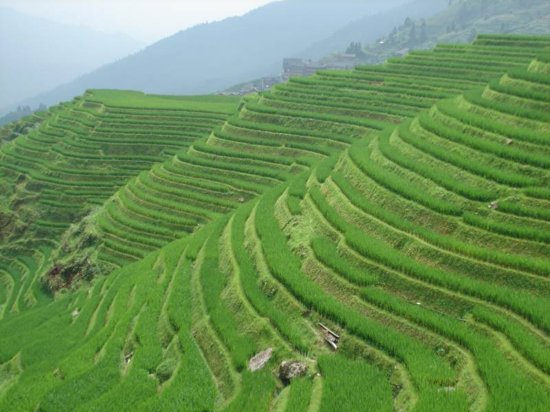 Terraced rice fields in Longji.