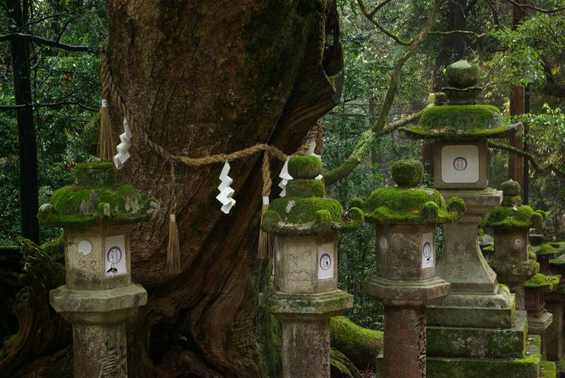 Forest lantern shrines by the Kasuga-Taisha temple.