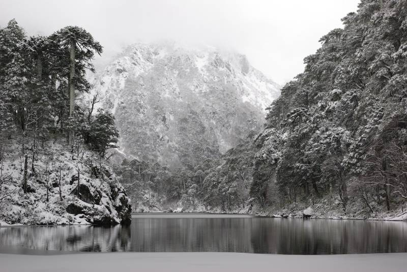 Frozen forest by a lake in the Huerquehue national park.