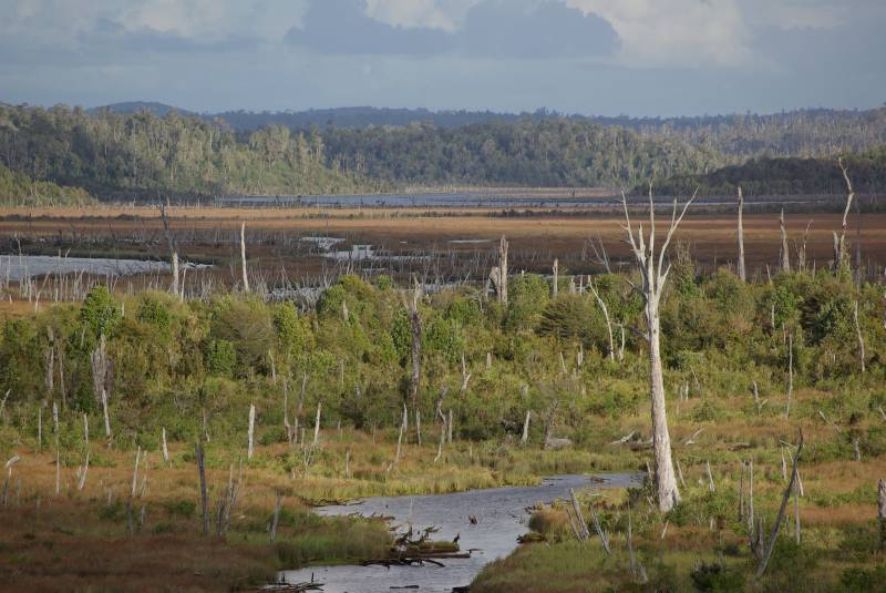 Chepu Valley flooded forest.
