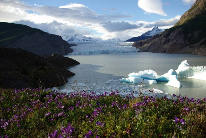 Icebergs in front of Glacier Grey.