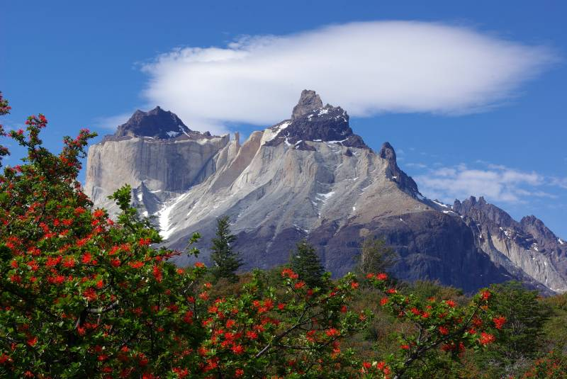 Cuernos del Paine and Chilean fire bush.