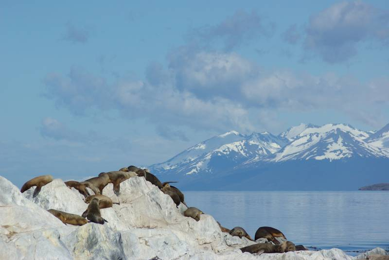 Sealions in the Beagle Channel.