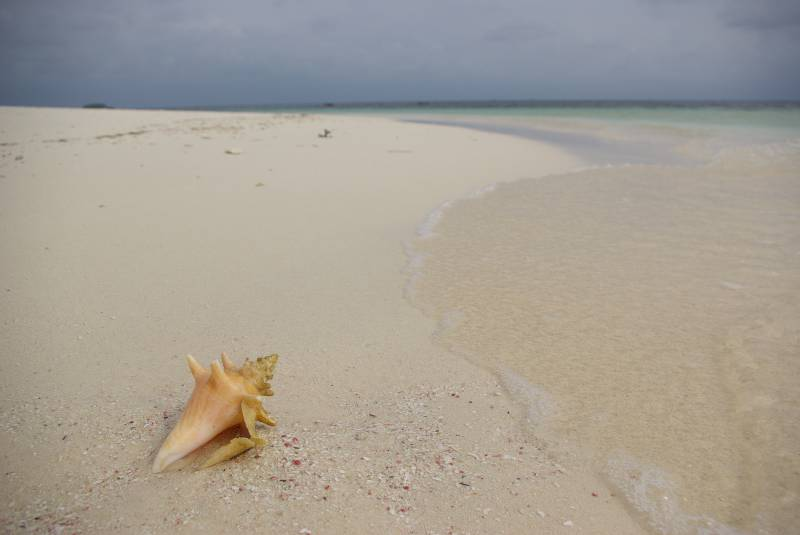 Sea shell on the beach, San Blas.