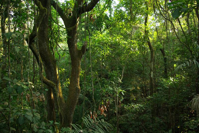 Forest in Soberania national park.